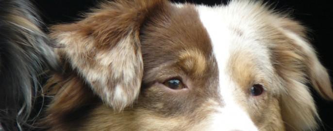 cropped-dogsflowersgeese-017.jpg