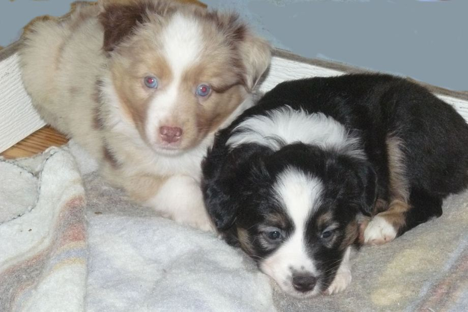 Dixie and Reba, Piper, 41 Days