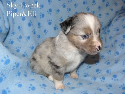 Sky at 4 weeks old. Out of Piper and Eli
