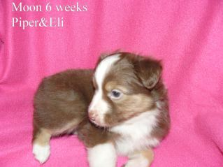 Moon 6 weeks Sold