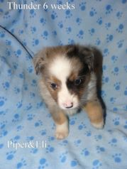 Thunder 6 weeks Sold
