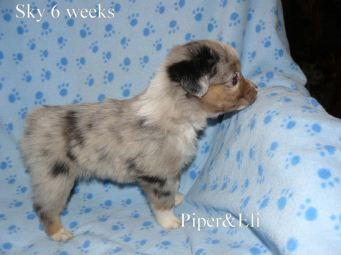 Sky 6 weeks Sold