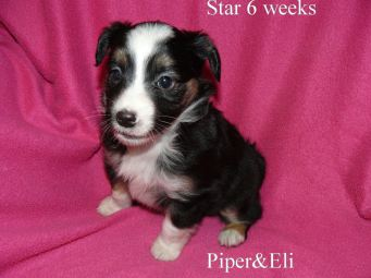 Star 6 weeks Sold