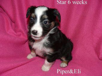 Star 6 weeks Sold