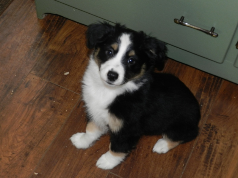 Jetta Female Available