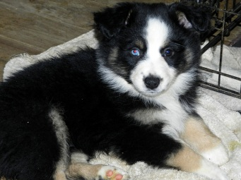 Sioux Sold Female One Blue Eye