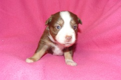 Spice s Clover at 3 weeks
