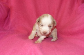 Spice s Patty at 3 weeks