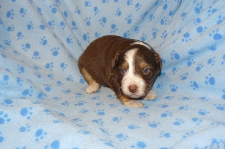 Spice s Shamrock at 3 weeks