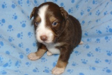 Spice s Shamrock at 3 week