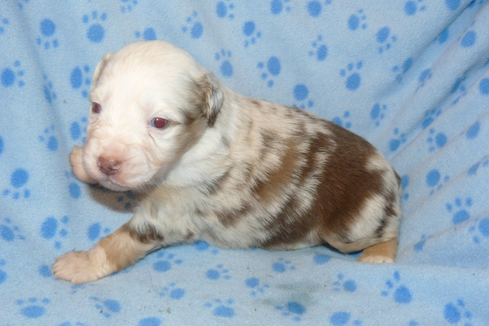 Spice s Treasure at 3 week