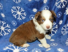 PLACED Prince Charming RTM $1600