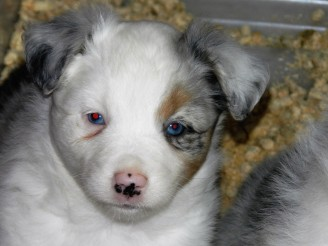 Placed Patch Female $1800